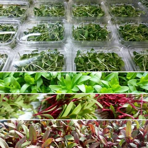 Microgreens, specialty crops, edible flowers, and more. Family owned & operated in Loxley. For more information, contact 251-223-3598.
